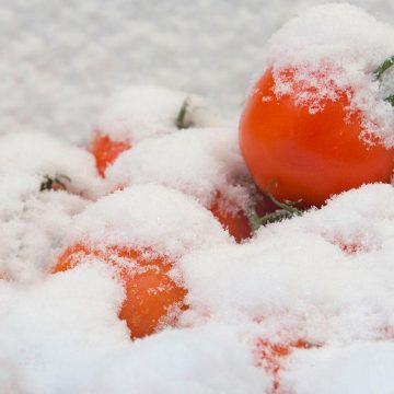 Don't Put Food Outside if Your Freezer Loses Power
